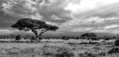 Initiative launched to improve access to localized weather data in Africa