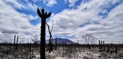 Australian bushfires push up CO₂ forecasts