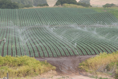 Irrigation can offset heat extremes caused by climate change, say scientists