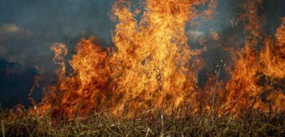 Research sheds light on unexpected behavior of Australia's Black Summer bushfires